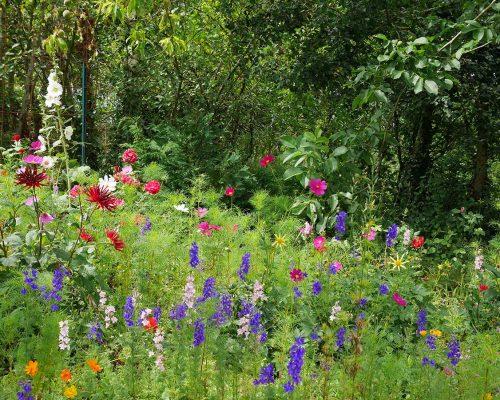 Jardin-gite-fleurs-hotes (1)