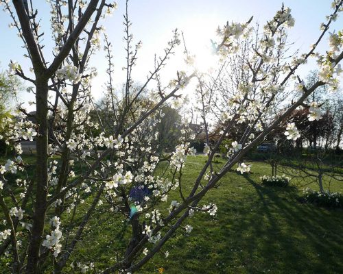 Jardin-gite-fleurs-hotes (10)