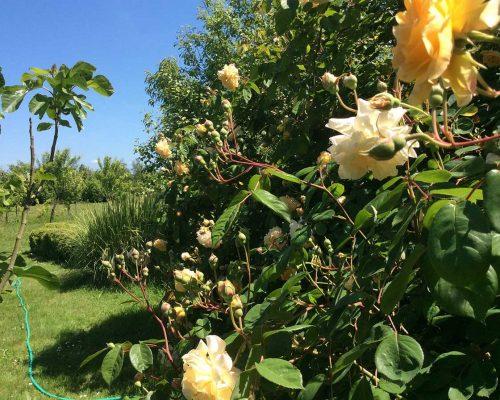 Jardin-gite-fleurs-hotes (11)