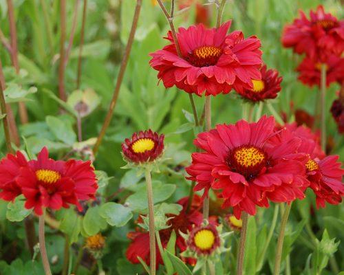 Jardin-gite-fleurs-hotes (13)