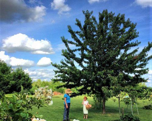 Jardin-gite-fleurs-hotes (2)
