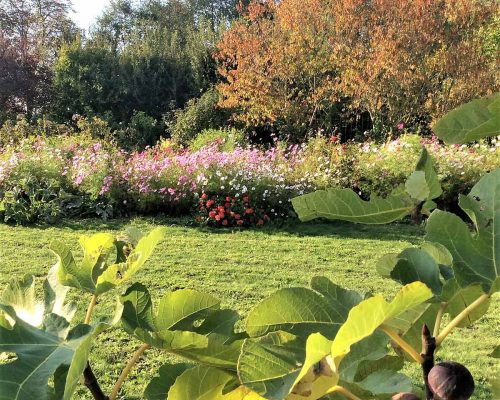 Jardin-gite-fleurs-hotes (3)