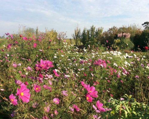 Jardin-gite-fleurs-hotes (5)