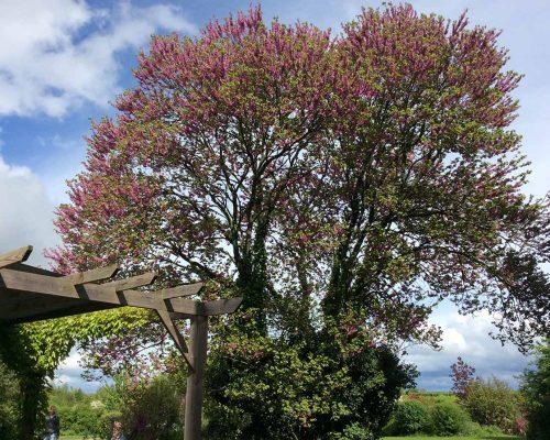 Jardin-gite-fleurs-hotes (6)